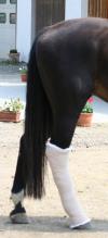 Manuelle Lymphdrainage beim Pferd von Dirk Berens v. Rautenfeld, Christina Fedele